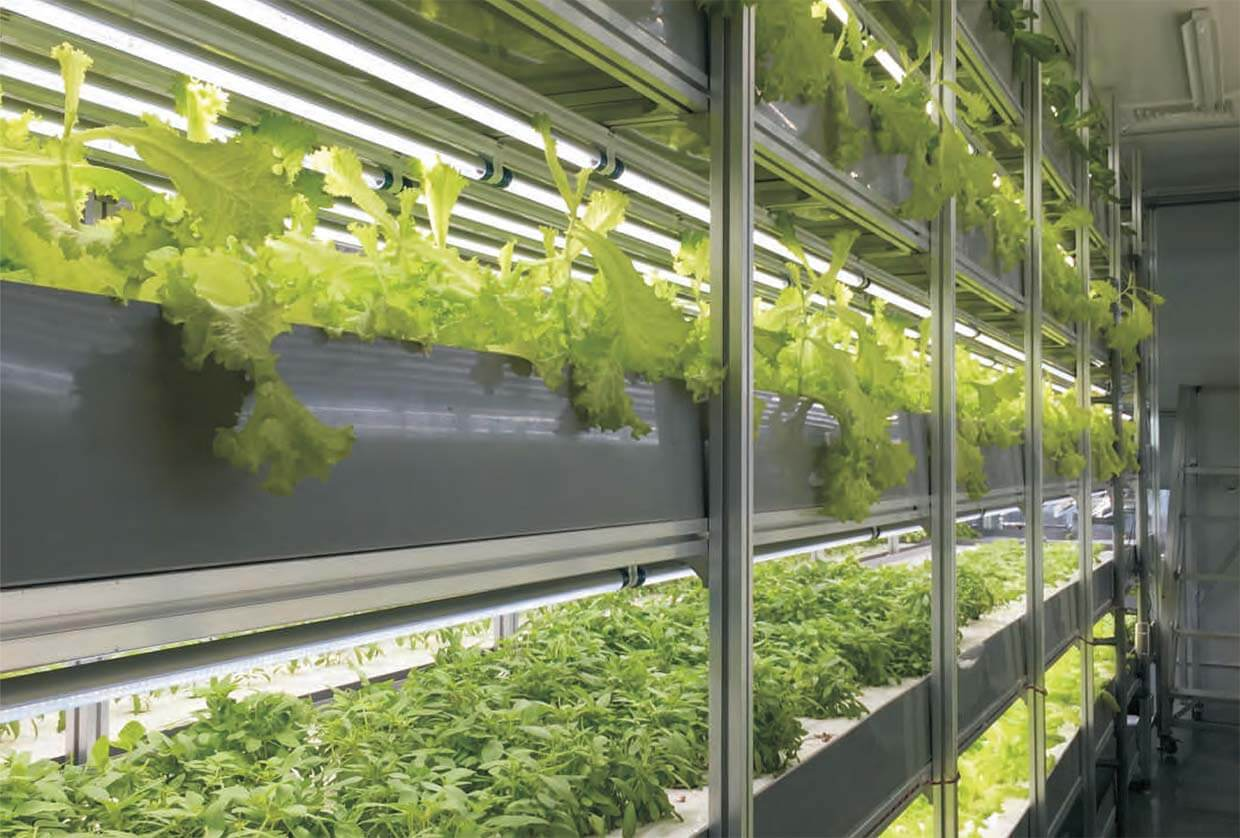 How to select the full spectrum LED grow lights for your plants?