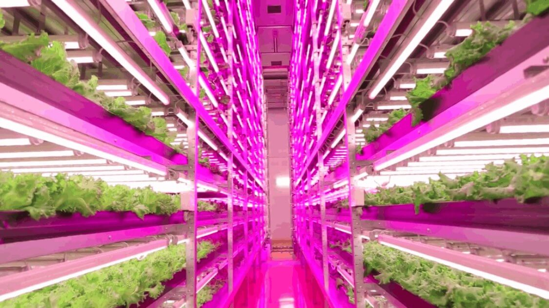 The Effects Of Led Grow Lights On Plants And The Benefits For The Grower