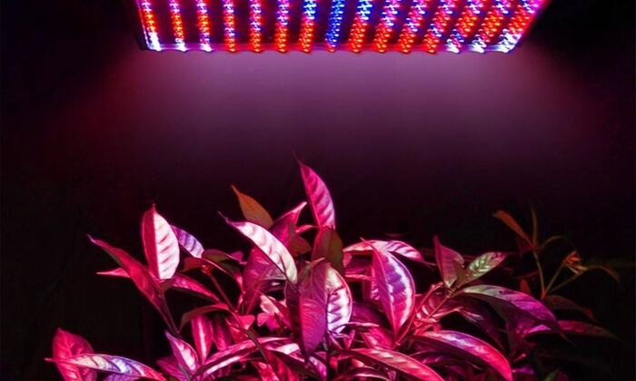 Create the Perfect Conditions for Your Plants With LED Grow Light