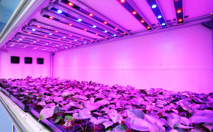 Top Choices of Best Led Grow Lights