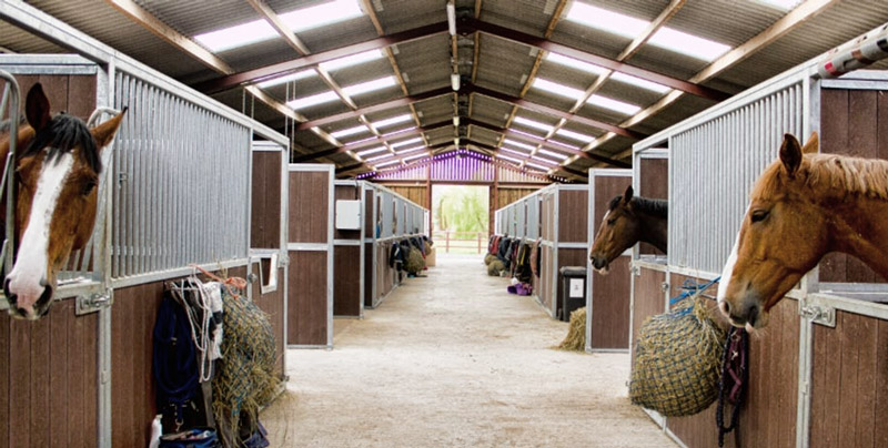 How A Light Source Influences The Reproduction and Hair Growth of Horses